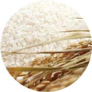 佐賀県産のお米